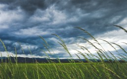 natur-wind-landschaft