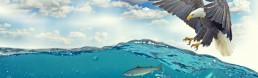 adler-meer-fisch-jagen-beute-wettbewerb-wettbewerbsanalyse